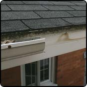 Water overflows and seeps between the gutter and the fascia board